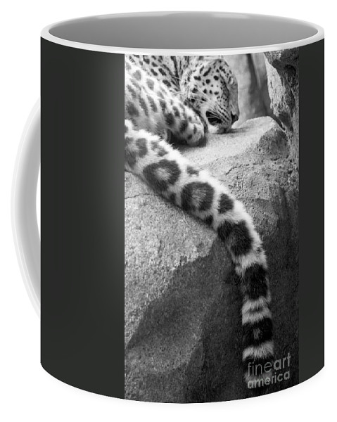 Leopard Coffee Mug featuring the photograph Dangling And Dozing In Black And White by Mary Mikawoz