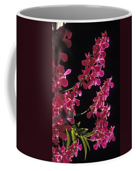 Danrobium Coffee Mug featuring the photograph Danrobium Orchids Used To Make Lais by Richard Nowitz
