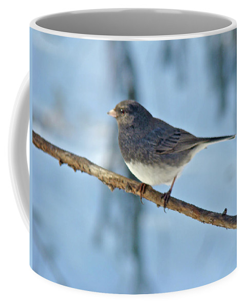 Junco Coffee Mug featuring the photograph Dark-eyed Junco Or Snowbird - Junco Hyemalis by Mother Nature