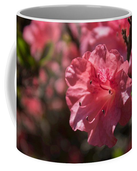 Azalea Coffee Mug featuring the photograph Dark Pink Azalea by Arlene Carmel
