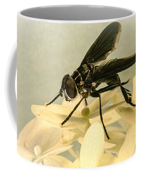 Comb Coffee Mug featuring the photograph Dark Winged Comb Footed Fly by Douglas Barnett