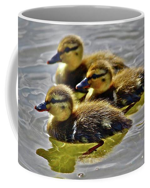 Ducks Coffee Mug featuring the photograph Darling Ducks by Diana Hatcher