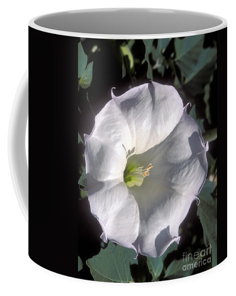 Zion National Park Coffee Mug featuring the photograph Datura Lily by Sandra Bronstein