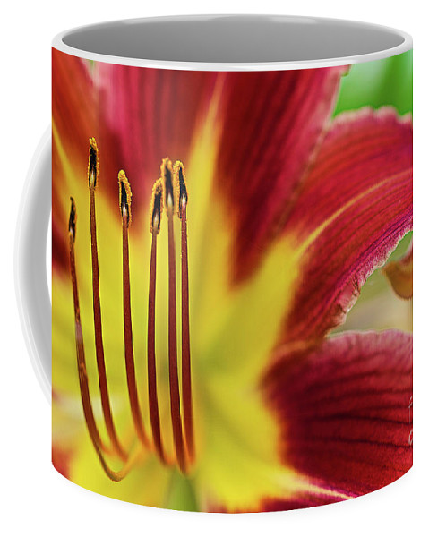 Day Lily Coffee Mug featuring the photograph Day Lily Macro by Amber D Hathaway Photography