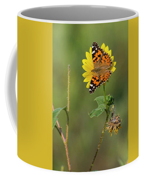Kansas Coffee Mug featuring the photograph Ddp Djd Painted Lady On Sunflower 2690 by David Drew