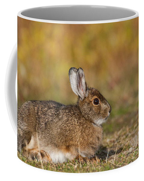 Alaska Coffee Mug featuring the photograph Ddp Djd Snowshoe Hare 98 by David Drew
