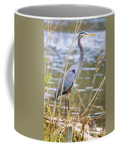 Blue Heron Coffee Mug featuring the photograph De Leon Springs Blue by Deborah Benoit