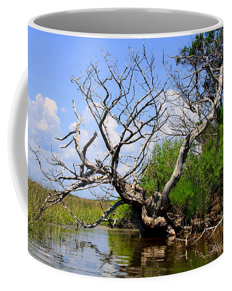 Dead Tree Coffee Mug featuring the photograph Dead Cedar Tree In Waccasassa Preserve by Barbara Bowen