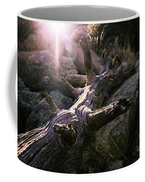 Tree Coffee Mug featuring the photograph Dead Tree by Robert Minkler