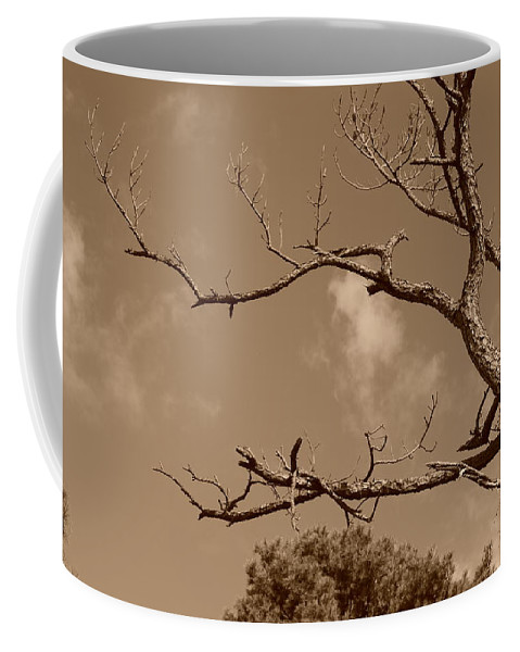 Sepia Coffee Mug featuring the photograph Dead Wood by Rob Hans