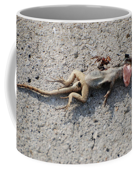 Lizards Coffee Mug featuring the photograph Death By Gum by Rob Hans