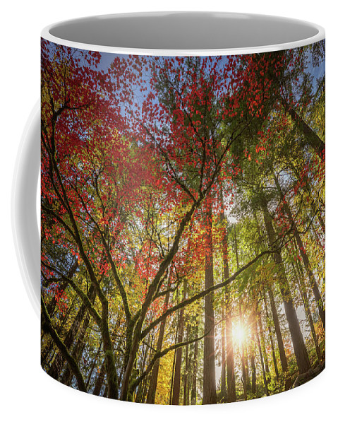 Oregon Coffee Mug featuring the photograph Decorated By Japanese Maple by William Freebilly photography
