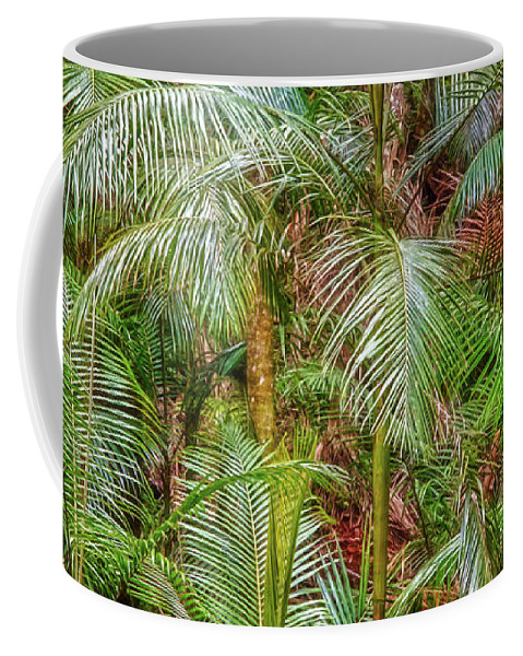 Web-portfolios Coffee Mug featuring the photograph Deep In The Forest, Tamborine Mountain by Dave Catley