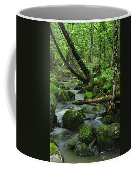 Stream Coffee Mug featuring the photograph Deep Woods Stream by Glenn Gordon