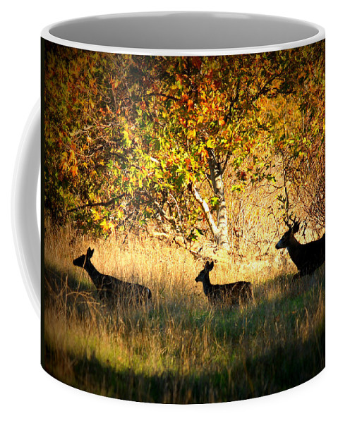 Landscape Coffee Mug featuring the photograph Deer Family In Sycamore Park by Carol Groenen