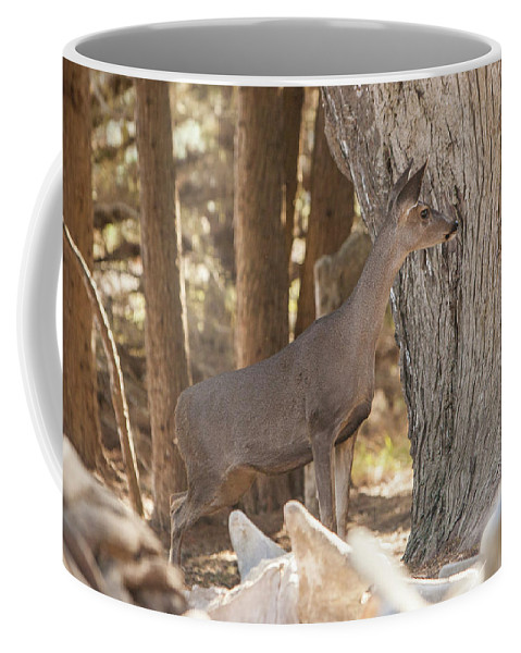 Deer Coffee Mug featuring the photograph Deer On The Look Out by Jason Hughes