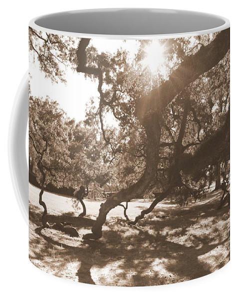 Sepia Coffee Mug featuring the photograph Defying Gravity In Sepia by Carol Groenen