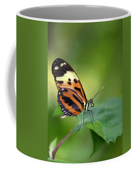 Butterfly Coffee Mug featuring the photograph Delicate Butterfly by Sabrina L Ryan