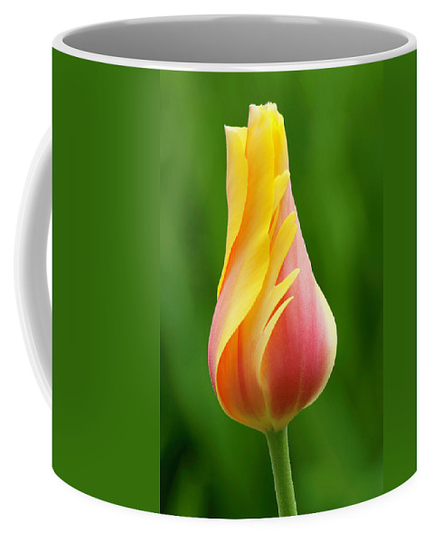 Delicate Tulip Coffee Mug featuring the photograph Delicate Folds Of A Tulip by Ram Vasudev