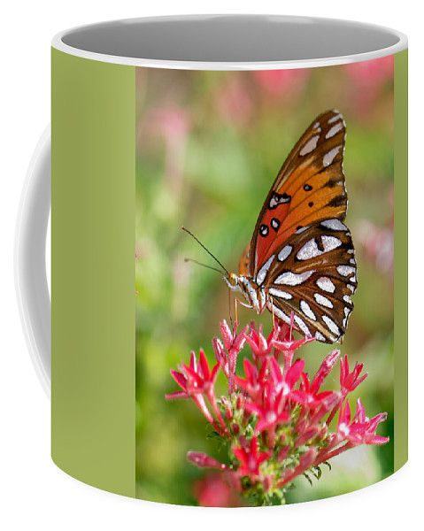 Butterfly Coffee Mug featuring the photograph Delight by Betty LaRue