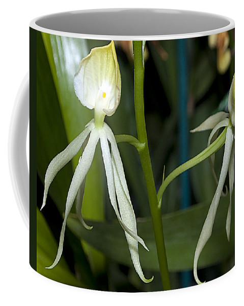 Nature Coffee Mug featuring the photograph Dendrobium Orchid by Kenneth Albin