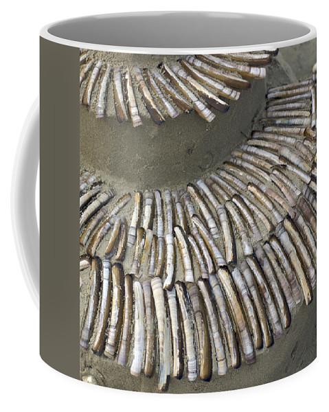 Nobody Coffee Mug featuring the photograph Denmark, Romo, Seashells, Razor Clams by Keenpress