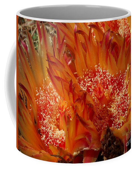 Missions Coffee Mug featuring the photograph Desert Fire by Kathy McClure