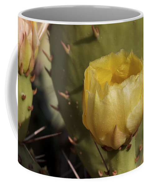 Cactus Coffee Mug featuring the photograph Desert Glow by Becky Titus