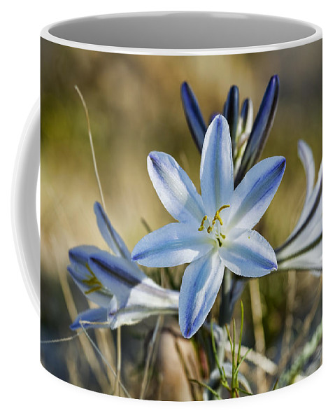 Lily Coffee Mug featuring the photograph Desert Lily by Kelley King