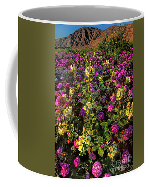 Dave Welling Coffee Mug featuring the photograph Desert Sand Verbena And Brown-eyed Primrose Below The Coyote Mountains California by Dave Welling
