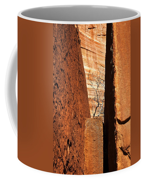 Vise Coffee Mug featuring the photograph Desert Vise by Mike Dawson