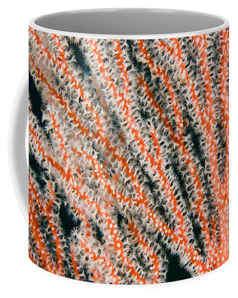 Abstract Coffee Mug featuring the photograph Detail Of Sea Fan, Or Gorgonian Coral by Tim Laman