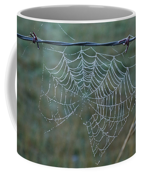 Spider Coffee Mug featuring the photograph Dew On The Web by Douglas Barnett