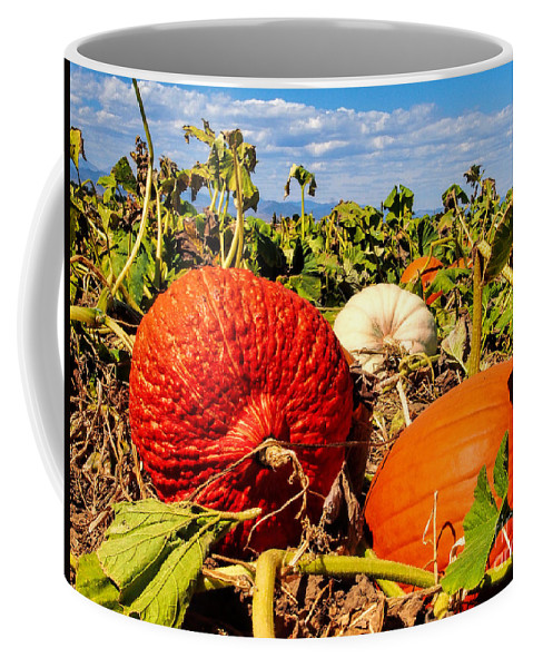 Pumpkin Patch Coffee Mug featuring the photograph Different Strokes by Jim Garrison