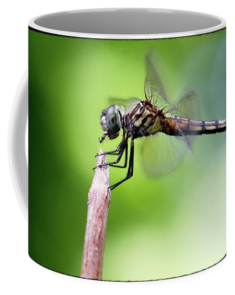 Dragonfly Coffee Mug featuring the photograph Dinner by David Cohron