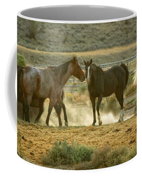 Horses Coffee Mug featuring the photograph Dinner Time by Donna Blackhall