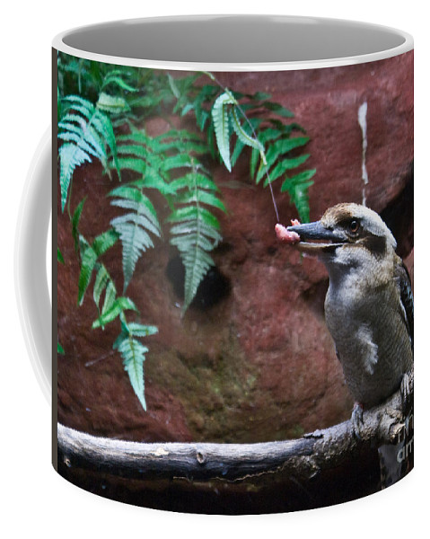 Dinner Coffee Mug featuring the photograph Dinner Time For Mister Bird by Douglas Barnett
