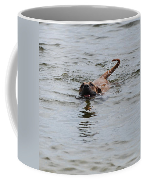 Swimming Coffee Mug featuring the photograph Dirty Water Dog by Rob Hans