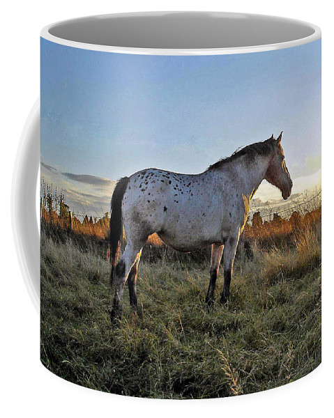 Appaloosa Coffee Mug featuring the photograph Distant Thoughts by Susan Baker