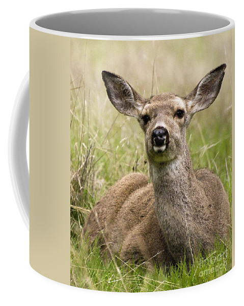 California Scenes Coffee Mug featuring the photograph Doe Eyes by Norman Andrus