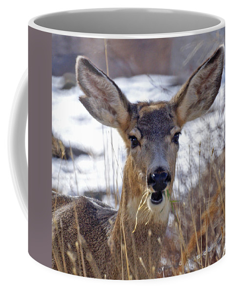 Doe Coffee Mug featuring the photograph Doe by Heather Coen
