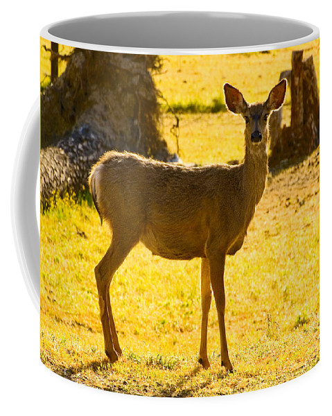 Doe Coffee Mug featuring the photograph Doe by Mick Burkey