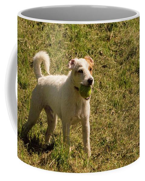 Dog Coffee Mug featuring the photograph Dog And A Ball by Janina Cibulskiene