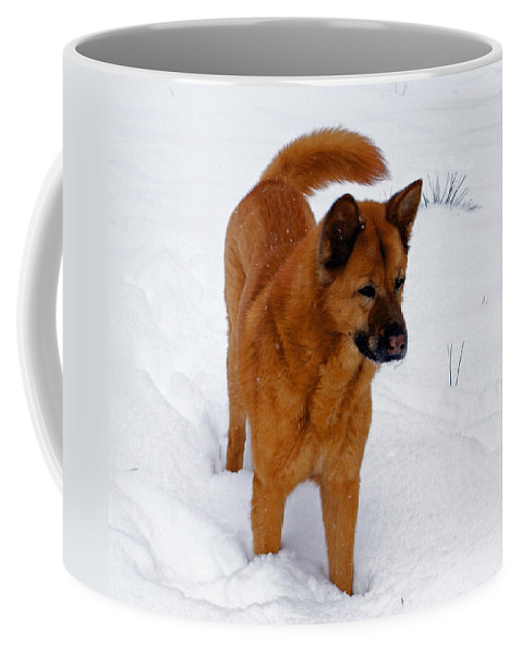 Snow Coffee Mug featuring the photograph Dog Days Of Winter by Jean Haynes