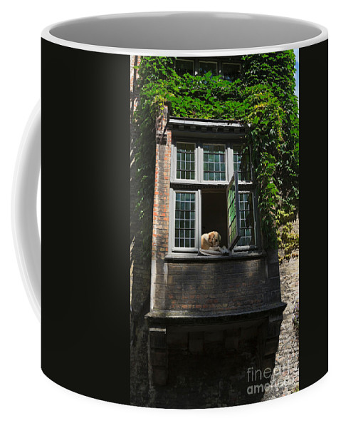 Dog Coffee Mug featuring the photograph Dog In A Window Above The Canal In Bruges Belgium by Louise Heusinkveld