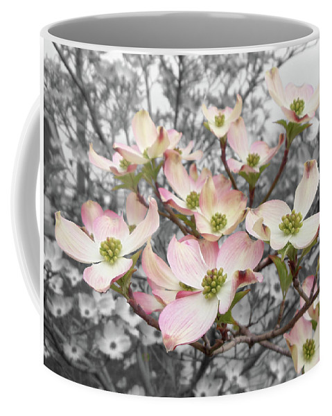 Dogwood Fine Art Photography