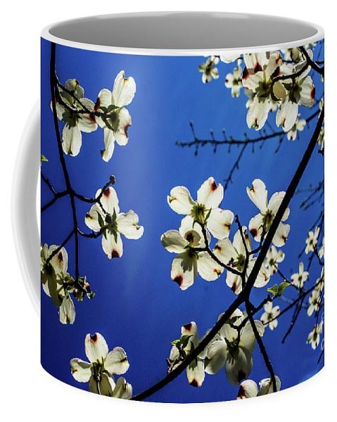 Dogwood Coffee Mug featuring the photograph Dogwood In The Sky #2 by Kevin Gladwell