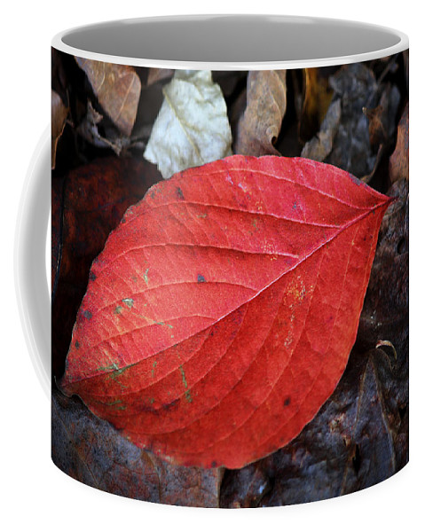 Dogwood Coffee Mug featuring the photograph Dogwood Leaf by Teresa Mucha