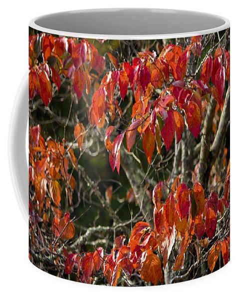 Dogwood Coffee Mug featuring the photograph Dogwood Tree by Teresa Mucha
