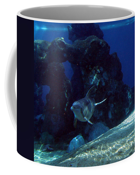 Dolphin Fish Aquatic Life Water Aquarium Sea Sandy Shore Rock Reef Coffee Mug featuring the photograph Dolphin by Andrea Lawrence